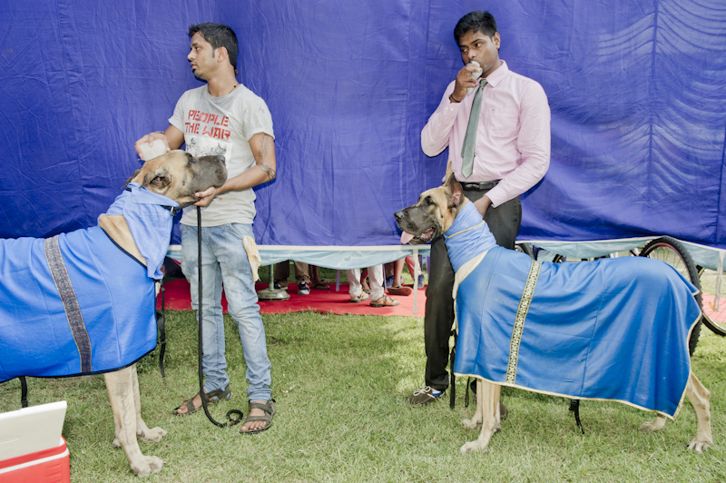 Dog Shows in India (2013-2015)